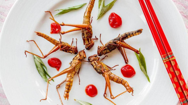 The best proteins are produced from insects?