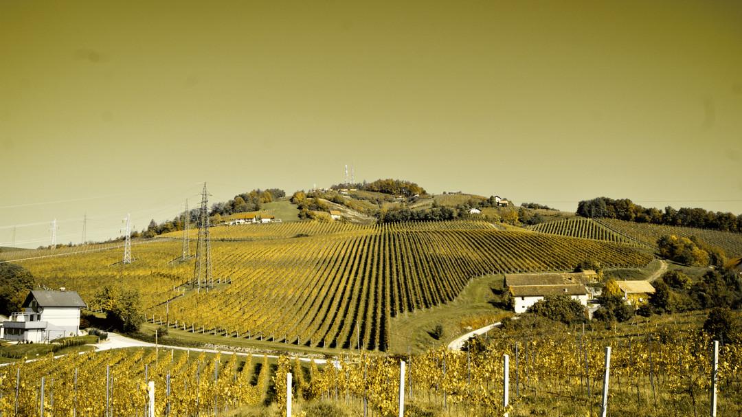 Oddih med vinogradi